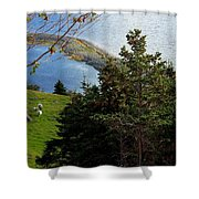Curious Sheep In A Grassy Meadow Shower Curtain