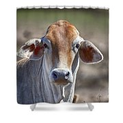Curious V5 Shower Curtain