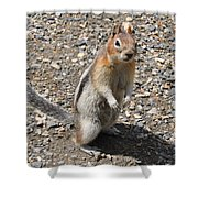 Curious Visitor Shower Curtain