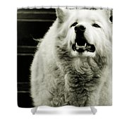 Curious Wolf Breed Shower Curtain