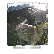 Curious Young Deer Shower Curtain
