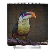 Curl-crested Aracari Shower Curtain