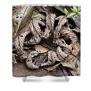 Curled Leaves Shower Curtain