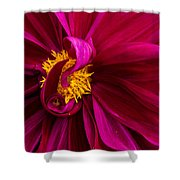 Curley Shower Curtain