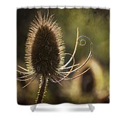 Curly And Spiky. Shower Curtain