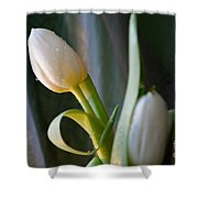 Curly And White Shower Curtain