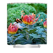 Curly Flowers Shower Curtain
