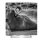 Curly Horns-black And White Shower Curtain