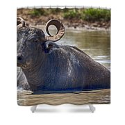 Curly Horns Shower Curtain