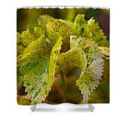 Curly Shower Curtain