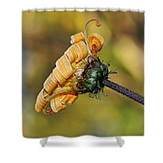 Curly Unfurling Daisy Shower Curtain