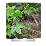 Currant Flower Shower Curtain