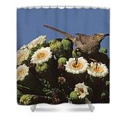 Curve-billed Thrasher Toxostoma Shower Curtain