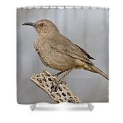 Curved Bill On Cactus Rib Shower Curtain