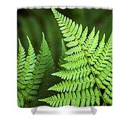 Curved Fern Leaf Shower Curtain