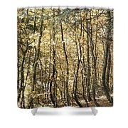 Curved Trunks Shower Curtain