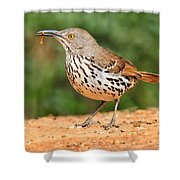Curvedbill Thrasher With Grub Shower Curtain