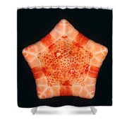 Cushion Star Shower Curtain