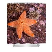Cushion Winged Sea Star Shower Curtain