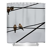 Cut-throat Wires Shower Curtain