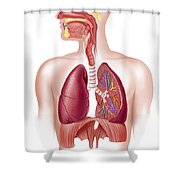 Cutaway Diagram Of Human Respiratory Shower Curtain