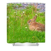 Cute And Fluffy - Digital Painting Effect Shower Curtain