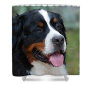 Cute Bernese Mountain Dog Shower Curtain