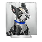 Boston Terrier Wall Art Shower Curtain