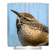 Cute Cactus Wren Shower Curtain by Robert Bales