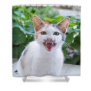 Cute Cat Shower Curtain