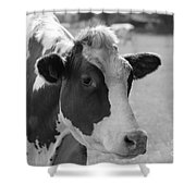 Cute Cow - Black And White Shower Curtain
