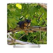 Cute Fuzzy Squirrel In Tree Shower Curtain