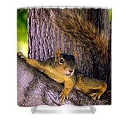 Cute Fuzzy Squirrel In Tree Near Garden Shower Curtain