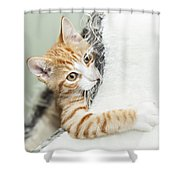 Cute Ginger Kitten In Igloo Shower Curtain