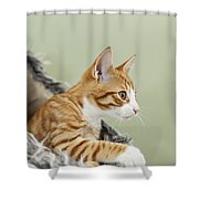Cute Ginger Kitten On The Loookout Shower Curtain