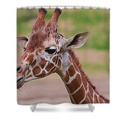 Cute Giraffe Portrait  Shower Curtain