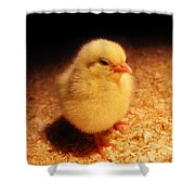 Cute Little Chick Shower Curtain