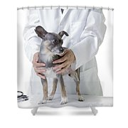 Cute Little Dog At The Vet Shower Curtain
