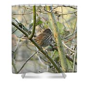 Cute Little Thrush Shower Curtain