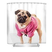 Cute Pug Wearing Sweater Shower Curtain