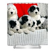Cute Puppies Shower Curtain