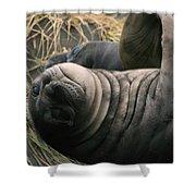 Cute Seal Shower Curtain