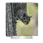 Cute Squirrel  Dare Me Shower Curtain