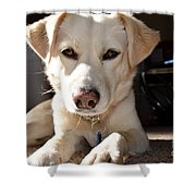 Cute White Dog Shower Curtain