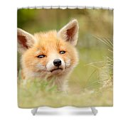 Cutie Face _red Fox Kit Shower Curtain