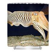 Cuttlefish 1 Shower Curtain