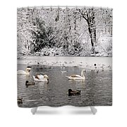 Cygnets In Winter Shower Curtain