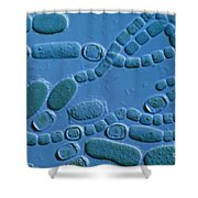 Cylindrospermum Filaments Shower Curtain