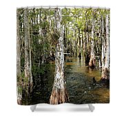 Cypres Swamp-1 Shower Curtain
