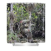 Cypress Airplant Display Shower Curtain